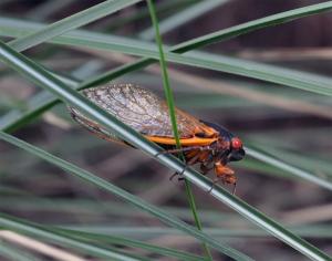 cicada on grass