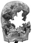 """""""Jane's"""" skull"""