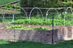 Virginia vegetables sleep better in raised beds