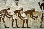 agriculture-in-ancient-Egypt5