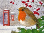 robin and letter box