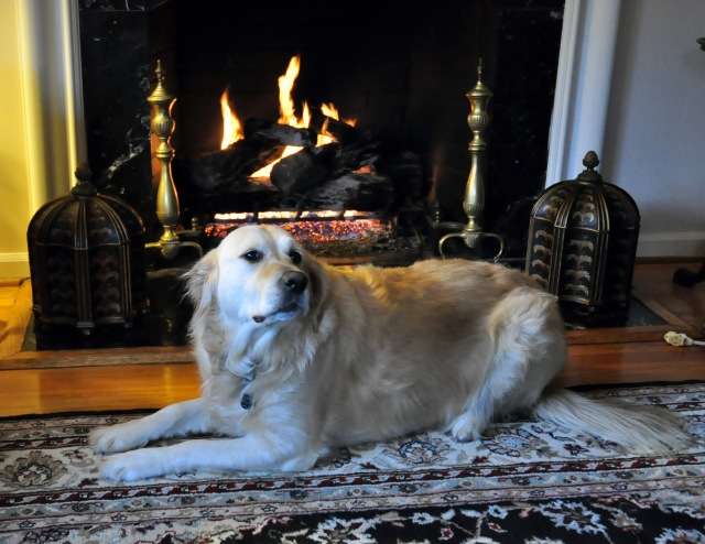 Lilah by fireside