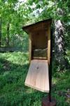 Chickadee nesting in bluebird box