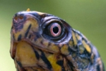 Terrence - a curious chelonian