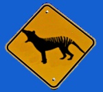 Watch out for thylacines